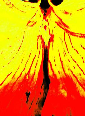 Livro: Tô levitando e Florestas Imaginárias de Marcelo Brettas, foto 7