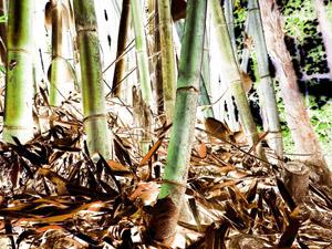 Livro: Tô levitando e Florestas Imaginárias de Marcelo Brettas, foto 8