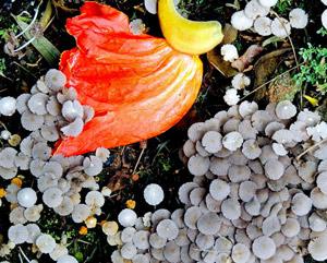 Livro: Tô levitando e Florestas Imaginárias de Marcelo Brettas, foto 3