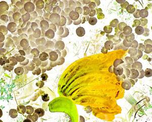 Livro: Tô levitando e Florestas Imaginárias de Marcelo Brettas, foto 6